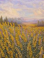 Yellow Lupins